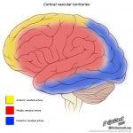 CME 09/02/17 – Neuroanatomy of the Critically Ill